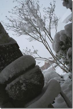 Snow 3.21.10 013