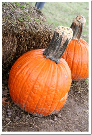 Pumpkin Patch 09 091