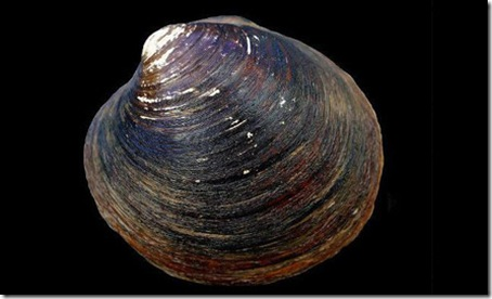 7 Animals With the Longest Life Spans - oceanquahog