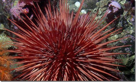 7 Animals With the Longest Life Spans - seaurchin