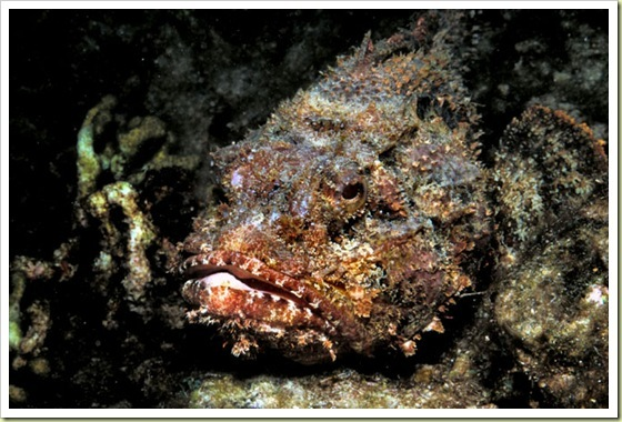 06-most-poisonous-animals-in-the-world-stonefish