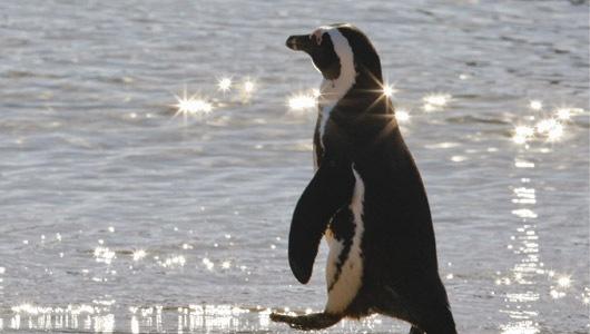 PenguinLion