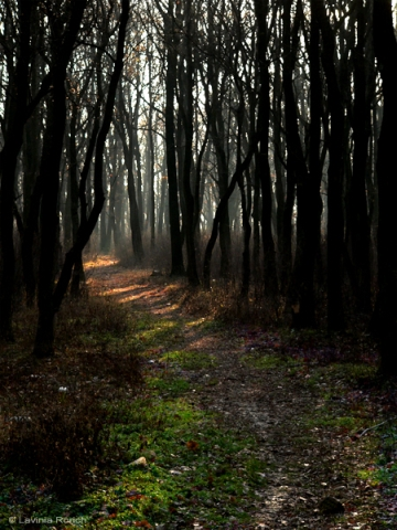 through-the-haunted-forest-by-lavinia-rorich