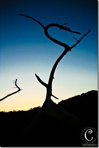 Torrey Pines-20