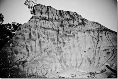 Torrey Pines- b&w rocks