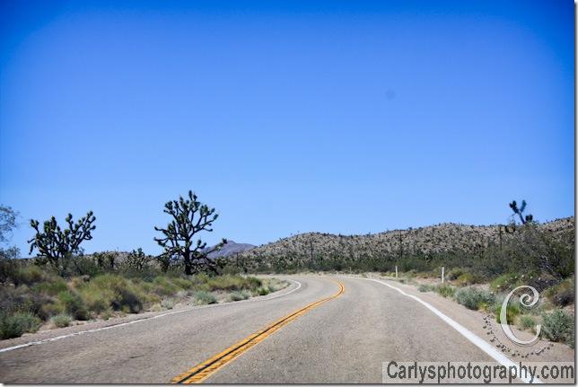 Mojave Desert-23