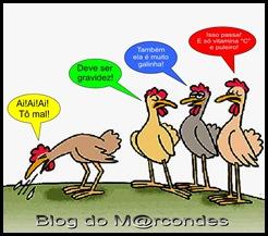 blogue-galinha-galinhas