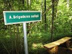 Brigaderes soliņš