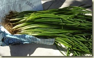lezignan onions_1_1