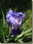 iris2_1_1