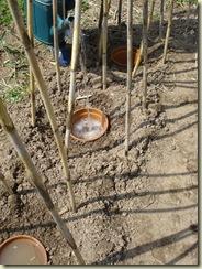 beans   terracotta pots 4_r1_1_1