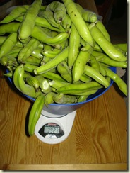 broad bean crop_1_1