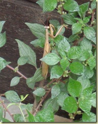DSC09576