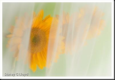 Blog_20100730_1-2