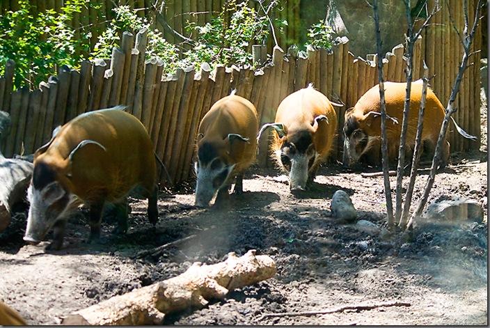 Zoo18