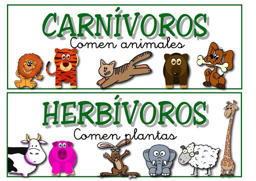 Animales Carnivoros Y Herbivoros Para Colorear