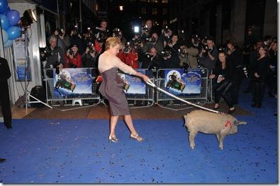 pig carpet