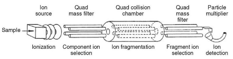 Schematic of a triple quadrupole mass spectrometer (TQMS)