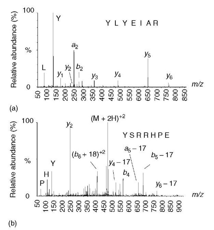 Effect of a mobile proton on peptide fragmentation. (a) A doubly protonated peptide ion containing only one arginine leaves a single mobile proton available for promoting cleavages at amide bonds, as indicated in Figure 1(a). This spectrum exhibits a contiguous series of y-type ions that can be easily sequenced. (b) A doubly protonated peptide ion containing two arginine residues, leaving no mobile proton. In this spectrum, there are no contiguous series of ions from which the sequence can be deduced, but there are several unusual fragment ions - doubly charged b+18 ions, plus a preponderance of neutral losses from a few y-, b-, and a-type ions