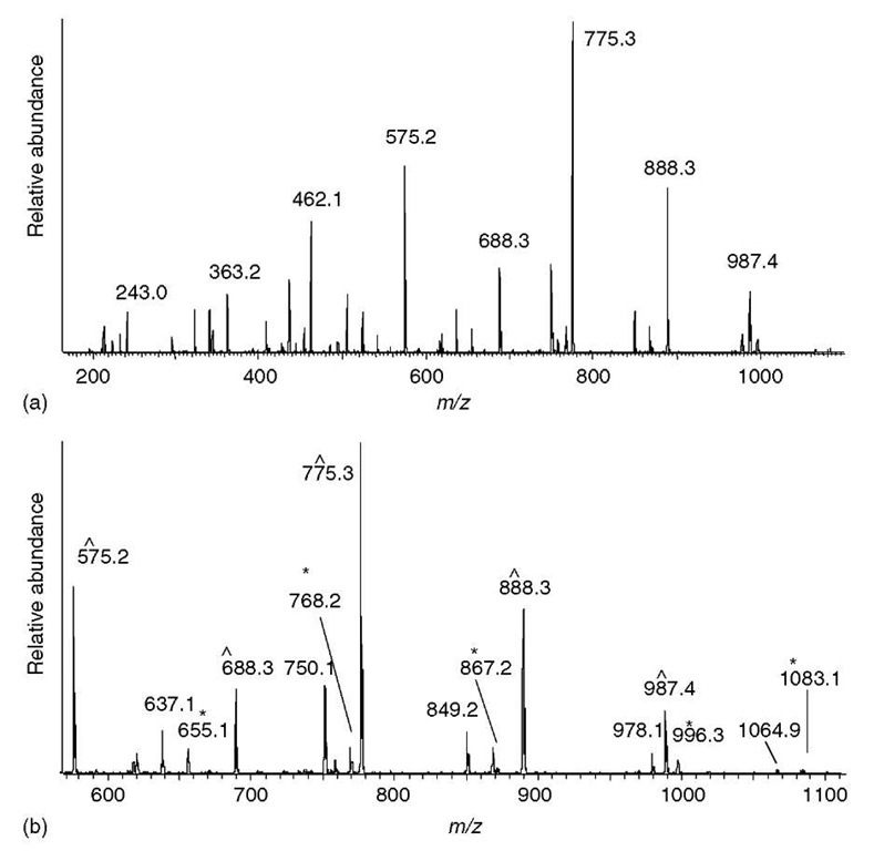 Sequencing a peptide of molecular weight 1228.7 from an ion trap MS/MS spectrum of a doubly charged precursor at m/z 615.4. (a) Entire spectrum is shown with a few of the major peaks labeled. (b) The region above the precursor ion m/z usually contains the fewest ions and exhibits the simplest fragmentation pattern. One series of ions (labeled ~) have mass differences corresponding to the partial sequence LSLV. The other series of ions (labeled *) all have satellite peaks 18 Da lower and delineate a different partial sequence LVES. The ion at m/z 1083 has the correct mass for a b-type ion resulting from the loss of a single lysine residue; therefore, the ion series marked with an asterisk is hypothesized to be a b-type ion series that delineates the partial sequence LVESK. The other series is presumed to be a y-type series. (c) From the partial sequence LVESK, the low-mass y-type ions (y 1 to y5) can be calculated (see Table 1) — m/z 147, 234, 363, 462, and 575. The ions matching these calculated y-type ions are labeled (~), and are contiguous with the similarly labeled (presumed y-type ions) in panel (b). The low-mass b-type ions can be calculated from the high-mass y-type ions (see text) —m/z 243, 342, 455, 542, and 655 - which are contiguous with the similarly labeled ions in panel (b)