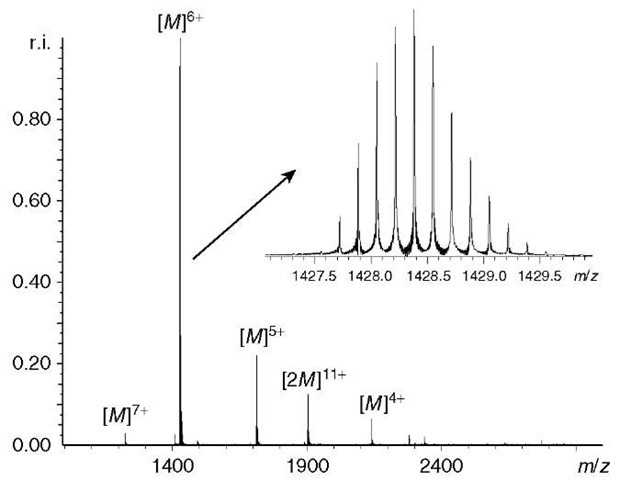 ESI FT-ICR mass spectrum of 20- M ubiquitin in an aqueous 10-mM ammonium acetate solution, measured in terms of relative intensity versus m/z. The ubiquitin ions are measured in the mass spectrum in a number of charge states, there were also some noncovalently bound ubiquitin ions present. The inset shows a closeup of the ubiquitin ions in the 6+ charge state, the isotopomers were clearly resolved