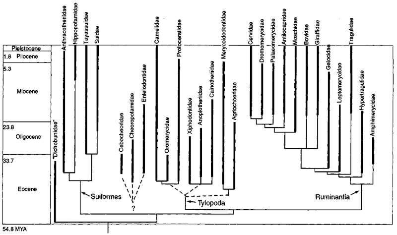 Phijlogeny and fossil occurrences of major lineages of Artiodactyla during the Cenozoic era. Epochs and radiometric ages are marked on the left.