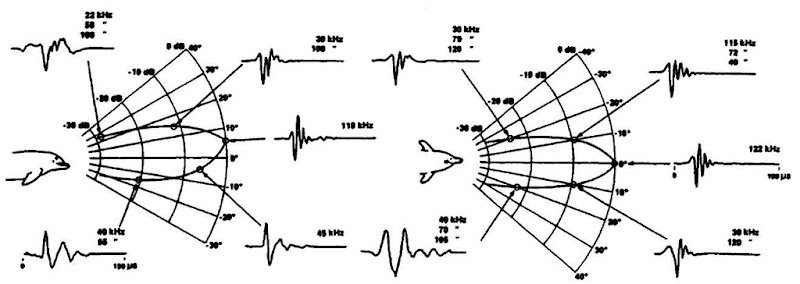 The transmission beam pattern in horizontal and vertical planes. The signals shown with each beam pattern are all the same signal captured simultaneously by five hydrophones located about the dolphin's head.