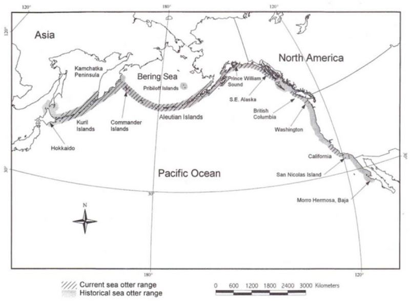 Historical and current distribution of sea otters in the North Pacific Ocean