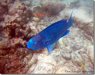 Aruba_1553
