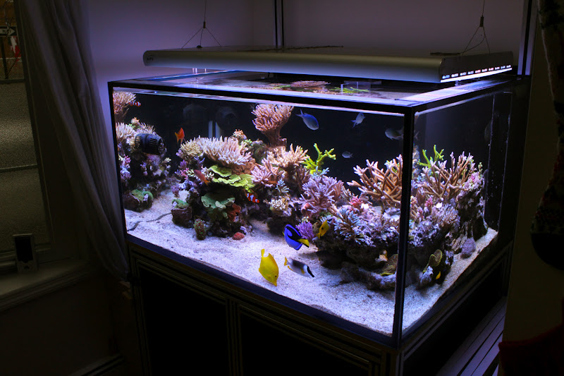 Rimless aquarium club page 19 reef central online for Rimless fish tank