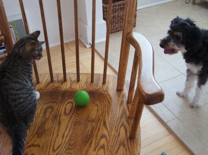 catsanddogs1-2010-07-4-18-41.jpg