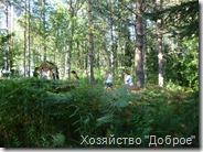 lembolovo_Priroda_01