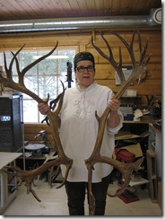 male antlers