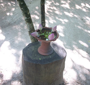mudhouse mud house hotel anamaduwa puttalam sri lanka lotus in clay vase on tree stump