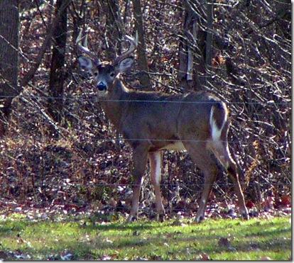 Buck 4