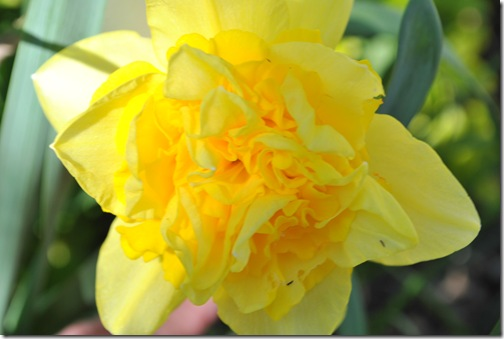 Spring Flowers 015