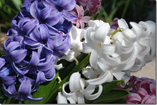 Spring Flowers 005