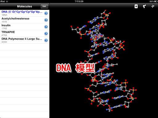 DNA 的結構
