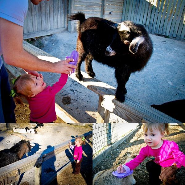 2009-11-29 Nashville Zoo1