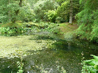 The pool in Park Wood