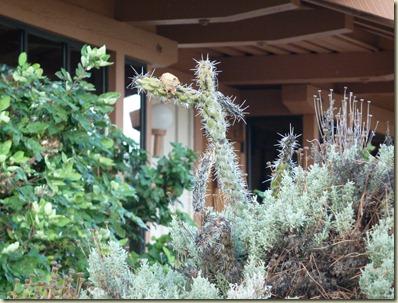 2010 09 22_Camp Verde to Tucson_2498