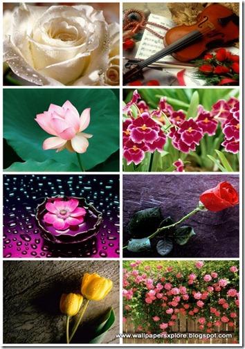 30 Flower Mix Wallpaper 1600 X 1200 (www.wallpapersxplore.blogspot