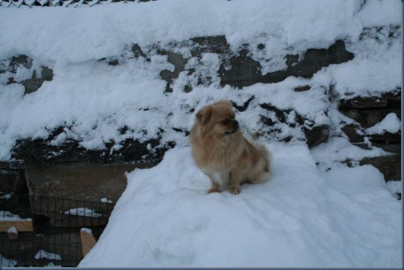 Luzy på snø haugen jan 10