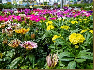 Home Depot Flowers