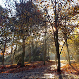 Gods Rays by Chrissy Woodhouse - Landscapes Weather ( sunbeams, winter sun, sunlight, etheral,  )