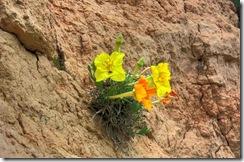 Primrose Cliff