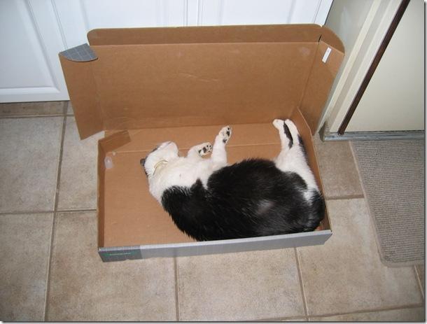 Rocky in box