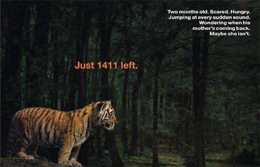 http://lh5.ggpht.com/_O4RsVH59uMk/TAS3zBa82OI/AAAAAAAABKc/Rbe6_rY8Zt4/tiger-cub.jpg