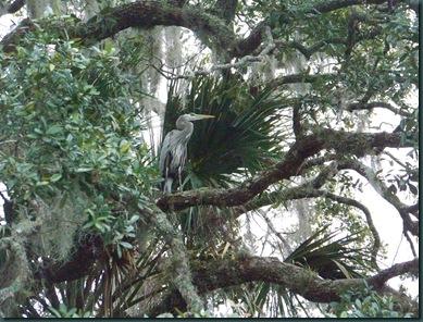 2.19.09 Silver Glen Springs, FL 025