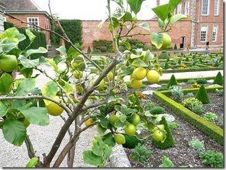 Хэнбери Холл, лимоны